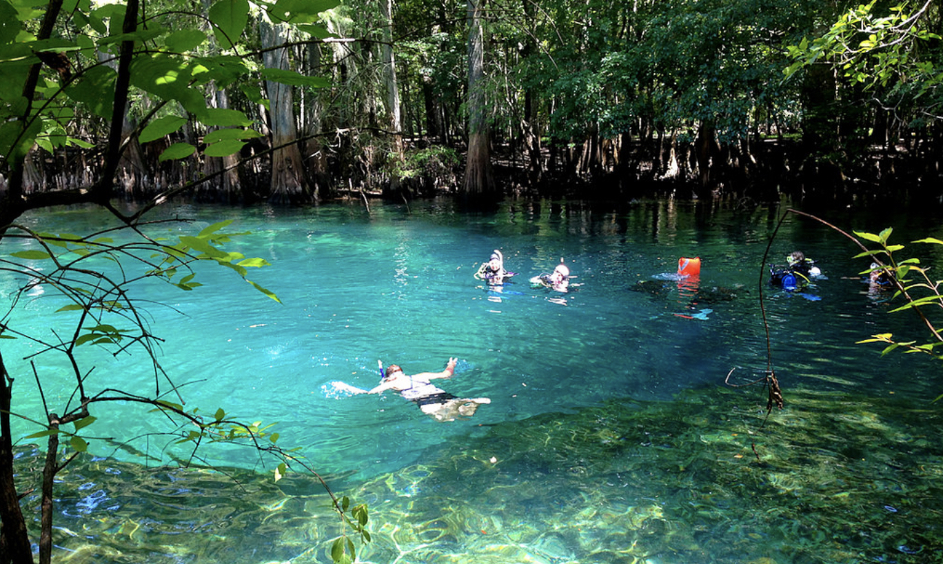 Top 5 Florida Springs to visit this Summer
